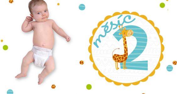 Vývoj miminka 2. měsíc