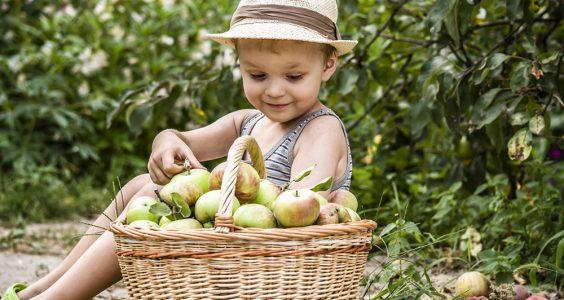 dítě u košíku z jablky