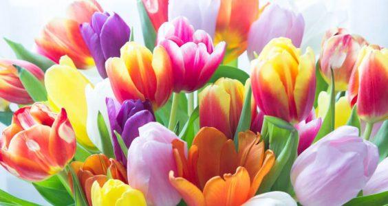 Jakou květinu darovat ženě 17