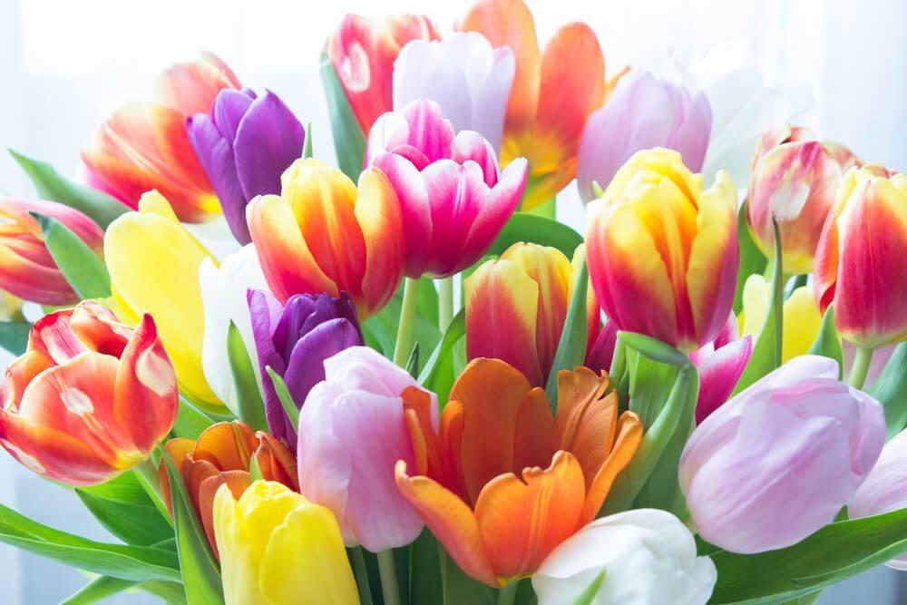 Jakou květinu darovat ženě 1