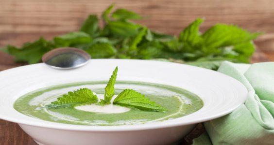 Kopřivová polévka 5