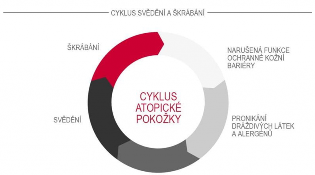 cyklus svědění a škrábání