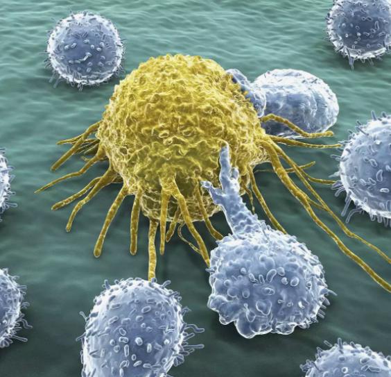 Happy Baby Imunitní systém